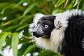 Lemur (26080686398).jpg
