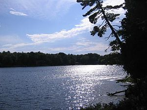 Muskoka Lakes, Ontario Real Estate and Homes for Sale