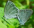 Lepidoptera 006.jpg