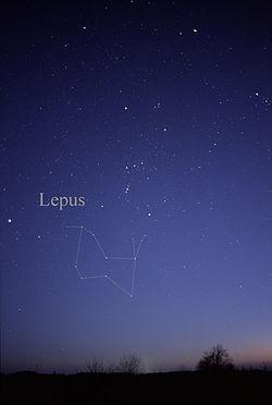 LepusCC.jpg