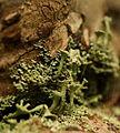 Lichen (7123547783).jpg