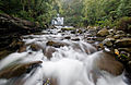 Liffey Falls 2, Liffey, Tasmania.jpg