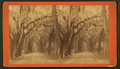 Live Oak Avenue in Bonaventure, from Robert N. Dennis collection of stereoscopic views 5.png