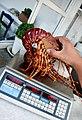 Lobster (2538679125).jpg