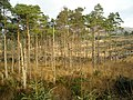 Loch Ard Forest - geograph.org.uk - 1056091.jpg