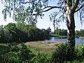 Lomonosov - panoramio.jpg