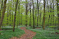 Lovely spring in the beech wood (4568212332).jpg