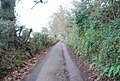 Luccombe Lane - geograph.org.uk - 1660473.jpg