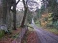 Lynedale - geograph.org.uk - 78000.jpg