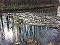 Müllansammlung in der Traisen sl1.jpg