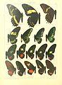 Macrolepidoptera15seit 0035.jpg