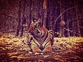 Majestic Mammal.jpg