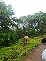 Majhgawan, Madhya Pradesh 485661, India - panoramio (6).jpg