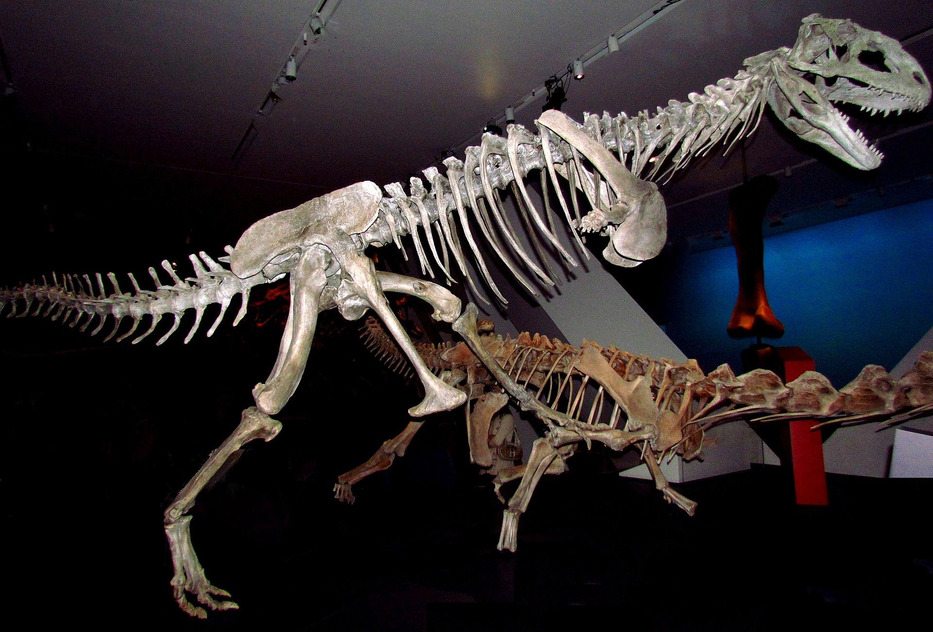 Dimorphodon  Wikipedia