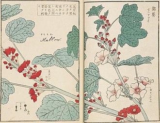 Kawahara Keiga - Image: Malva sp. ゼニアオイ