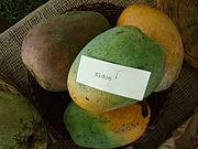 Mango Eldon Asit fs8.jpg