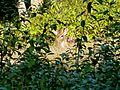 Mangrove Forest Katka Sundarban National Park Bangladesh - panoramio (2).jpg