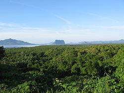 A blanket of green mangrove stretches out, with volcanic mountains in the distance.