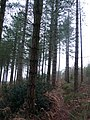 Marl Pits Woods, Affpuddle, Dorset - geograph.org.uk - 662135.jpg