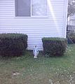 Mary front yard Medford, MA.jpg