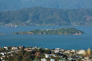 Matiu / Somes Island island in New Zealand