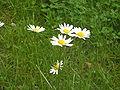 MatthiasGor kwiatek.jpg