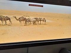Mauritania deserto.jpg