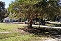Maxie Church and Cemetery.jpg