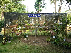English: A garden growing medicinal herbs of N...
