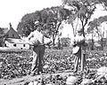 Melon de Montreal - 1925.jpg