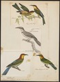 Merops quinticolor - 1782-1825 - Print - Iconographia Zoologica - Special Collections University of Amsterdam - UBA01 IZ16800343.tif