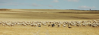 La Mancha - Pastures and sheep in La Mancha