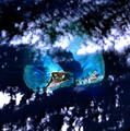 Midway Atoll.png
