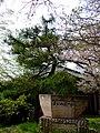 Mikuriya 6636.jpg
