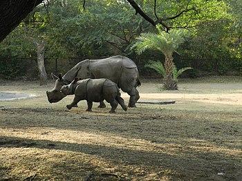 Mom and Baby Rhinoceros.jpg