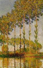 Row of poplars in autumn