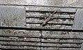 Moreau's Tropical House Gecko (Hemidactylus mabouia) (6002569430).jpg