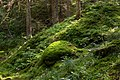Moss-covered boulder on a slope in Gullmarsskogen ravine.jpg