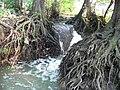 Motolský potok, pod zastávkou Hotel Golf, vodopád mezi kořeny (01).jpg