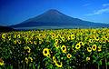 Mount Fuji and Sunflower 1995-7-30.jpg