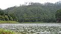 Munnar - views from Munnar (33).jpg