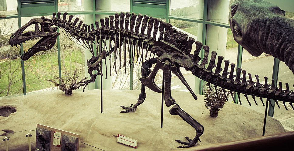 Museum of Natural Science Acrocanthosaurus