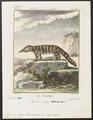 Myrmecophaga tetradactyla - 1700-1880 - Print - Iconographia Zoologica - Special Collections University of Amsterdam - UBA01 IZ21000033.tif
