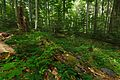 Národná prírodná rezervácia Stužica, Národný park Poloniny (10).jpg