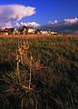 NRCSCO02002 - Colorado (1579)(NRCS Photo Gallery).jpg
