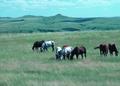 NRCSSD85007 - South Dakota (6197)(NRCS Photo Gallery).tif