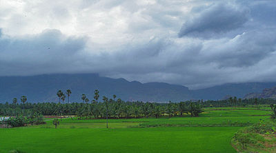 Agriculture forms a major portion of the state's economy. Nagercoil paddy fields.jpg