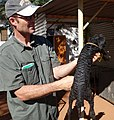 Namibia 2017-06 (043) Begutachtung eines Swakara-Lamms.jpg