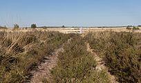 Nationaal Park Veluwezoom, panorama met hek foto8 2016-05-08 17.15.jpg