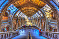 Natural History Museum, London, UK.jpg